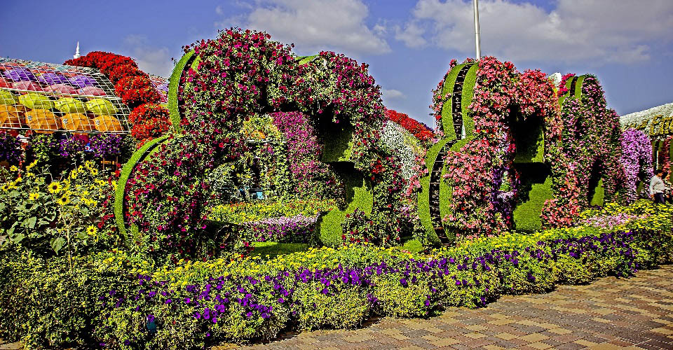 Image Description for http://80.88.88.181:8888/gpsviaggi/gpsviaggi/packages_photos/731/Dubai-Miracle-Garden-1.jpg