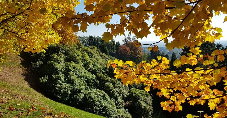 Image Description for http://80.88.88.181:8888/gpsviaggi/gpsviaggi/packages_photos/871/Parco-della-Burcina-Foliage-1.jpeg